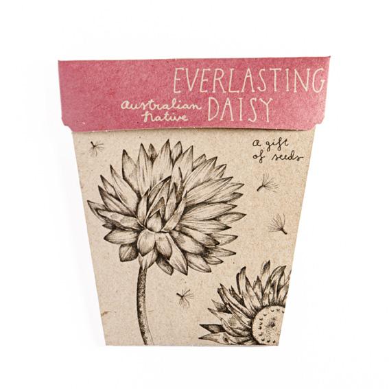 everlasting daisy seeds memorial garden