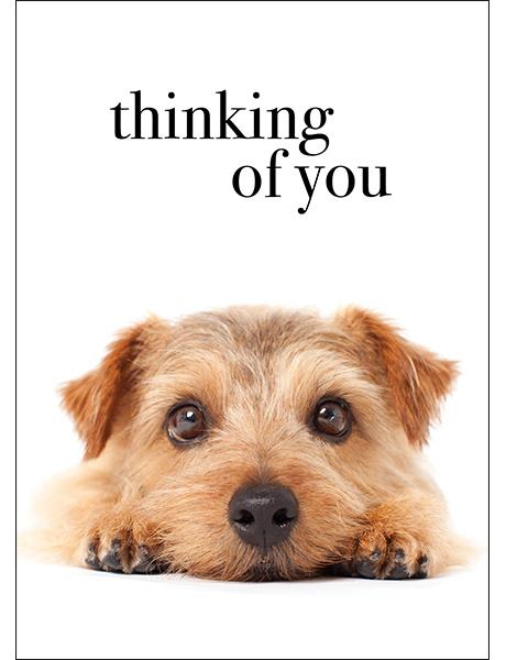 thinking of you pet loss sympathy card